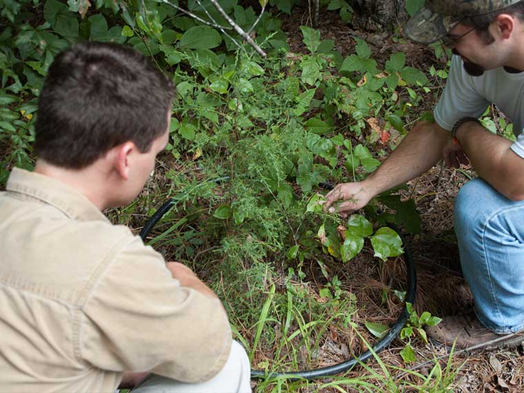 Environmental and Wildlife Management toughest undergraduate degree