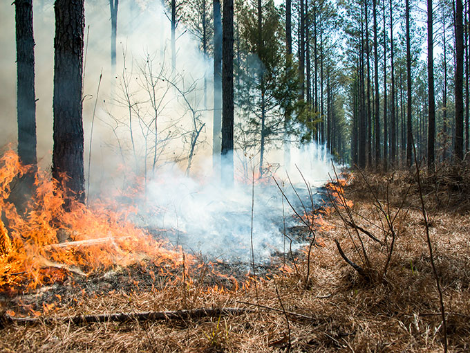 March highlights forest fire prevention efforts