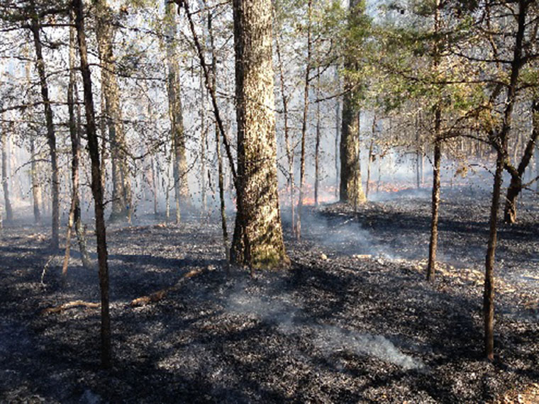 Hardwoods Ablaze: FWRC research finds prescribed fire is good for upland oaks